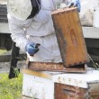 Beekeeper Collects Honey — Stockfoto