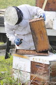 Beekeeper Collects Honey — Stock Photo
