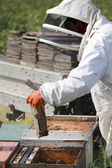Removing Beehive Plate or Frame — Stock Photo