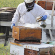 Smoking or Fogging Beehive Box — Stockfoto