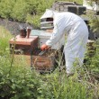 Beekeeper at Work — Photo
