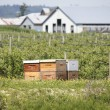 Rented Beehive Boxes — Stockfoto