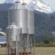 Chicken Feed Silos — Stock Photo