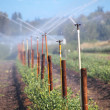 Sprinkler System for Rural Acreage — Stock Photo