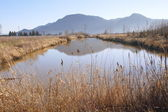 Valley Marshland — Stock Photo