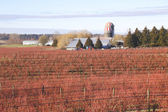 Canadian Winter Berry Farm — Stok fotoğraf