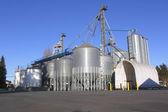Grain Feed Plant — Stockfoto