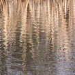 Winter Reed Reflection — Stock Photo #41232809