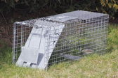 Rodent Trap — Stock Photo