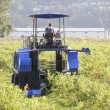 Berry Picking Machine — Stock Photo #49343103