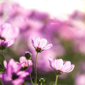 Blossom pink flower — Stock Photo