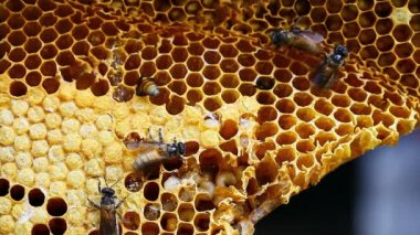 Brown beautiful honeycomb background — Стоковое видео