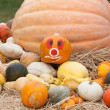 Pumpkins with different colours in the field — Stock Photo #32128147