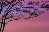 Tree at dawn with rays of the sun — Stock Photo
