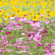 Beautiful flowers in the meadow — Stock Photo