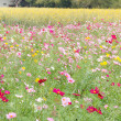 Beautiful flowers in the meadow — Stock Photo #32133567