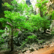 Stock Photo: Enchanting tropical mountain cave