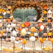 Colours Pumpkins — Stockfoto