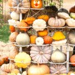 Colours Pumpkins — 图库照片