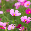 Beautiful flowers in the meadow  — Stockfoto