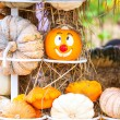 Colours Pumpkins — Stock Photo