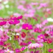 Beautiful flowers in the meadow — Stock Photo #32139969