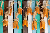 Dried corn hung on colorful wooden wall — Stock Photo