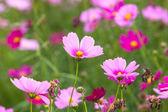 Beautiful flowers in the meadow — Fotografia Stock