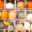 Stock Photo: Colours Pumpkins