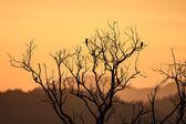 Krásný západ slunce a pták na mrtvý strom — Stock fotografie