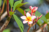 Branch of tropical flowers — Stock Photo