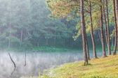 Promienie słoneczne w naturalne lasy świerkowe — Zdjęcie stockowe