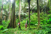 Oude bos, regenwoud — Stockfoto