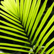 Palm leaf backlit with sunlight — Stock Photo #32179755
