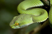 Green Snake — Stock Photo