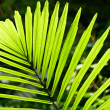 Palm leaf backlit with sunlight — Stock Photo #32198511