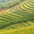Rice terraces and cottage in the mountains — Stock Photo