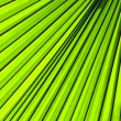 Palm leaf backlit with sunlight — Stock Photo #32201497