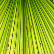 Palm leaf backlit with sunlight — Stock Photo #32202823