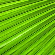 Palm leaf backlit with sunlight — Stock Photo #32205069