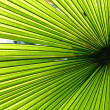 Palm leaf backlit with sunlight — Stock Photo #32207705