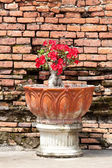 Red flowers in a pot and back wall — Stock Photo