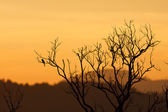 Belo pôr do sol e árvore morta — Foto Stock