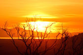 Beautiful sunrise on the sea and dead tree — Stock Photo