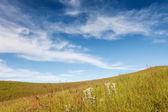 在多云的蓝天下的草田 — 图库照片