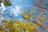 Autumn forest with sunlight and blue sky — Stock Photo