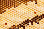 Yellow beautiful honeycomb background — Stock Photo