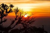 árvore ao amanhecer com os raios do sol — Foto Stock