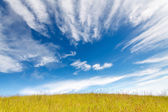 Grass field under blue cloudy sky — Stock Photo