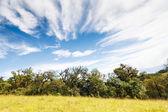 Regenwoud en blauwe hemel — Stockfoto